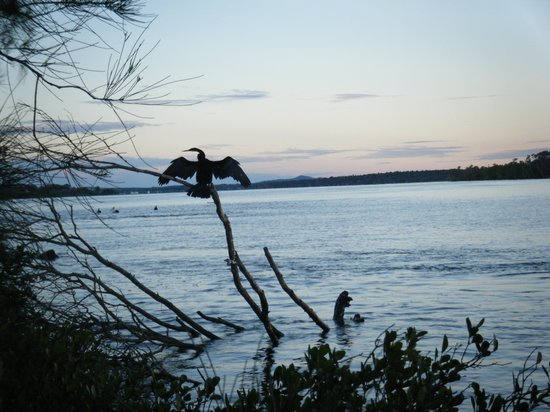 Anchorage Holiday Park: excellent bird life