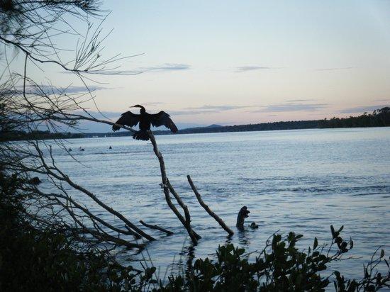 Iluka, Australia: excellent bird life