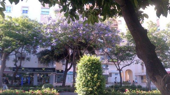 Avenida Ricardo Soriano: Avenida