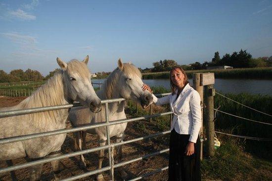 Hotel Les Arnelles : les Arnelles horses