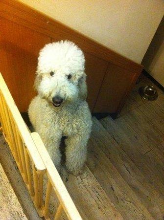 Gangnam Guesthouse: TOP the cutest dog in da house!