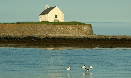 The Prince Llewelyn Bed & Breakfast: Birds in Flight by The Church in the Sea