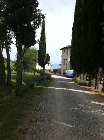 Villa Campestri Olive Oil Resort: Einfahrt zur Villa