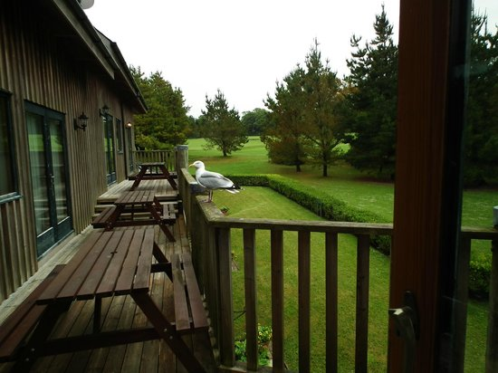 Tregenna Castle Resort: Grounds