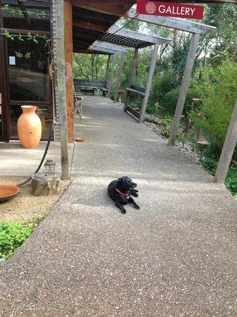 Marion Rosetzky Gallery: Sascha waiting greet visitors