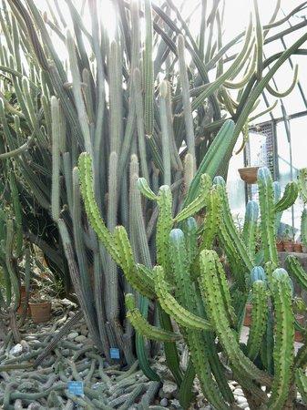 La serra delle piante grasse foto di orto botanico di for Serra piante grasse