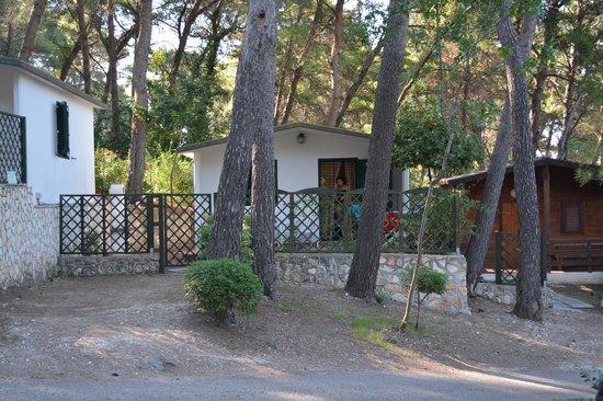 Camping Villaggio Internazionale: Immersi nella pineta