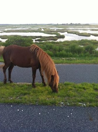Assateague State Park Camping: on the drive in.