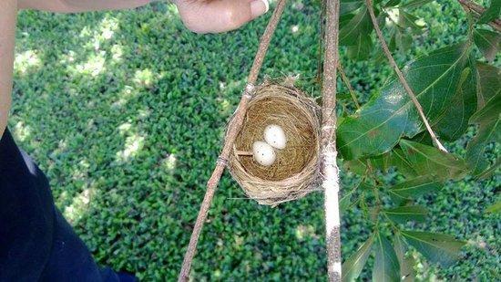 Asclepios Wellness & Healing Retreat: The eggs