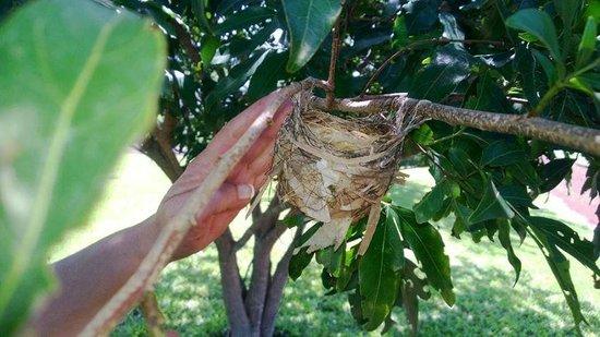 Asclepios Wellness & Healing Retreat: The nest