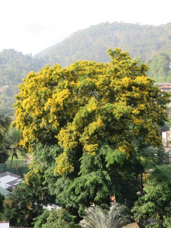 Villa 49: This tree is in bloom only one day a year and we were there!