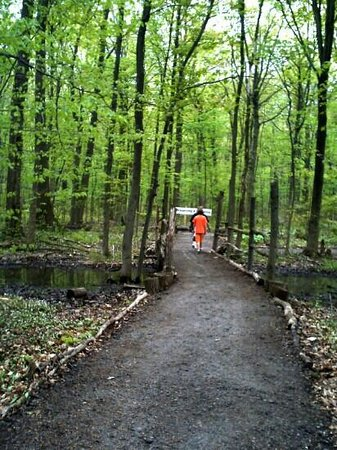 Heartland Forest : forest trails