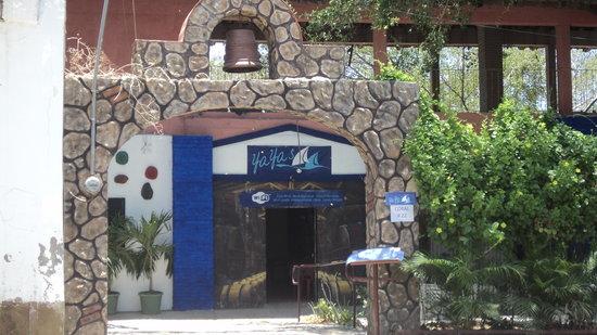 Yaya's Cafe: Coral # 22