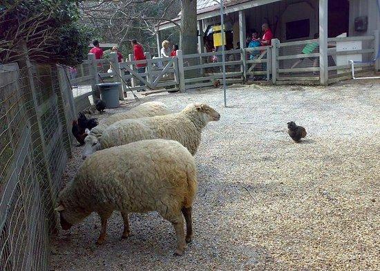 Jackson, MS: ZOO - zwierzęta z zagrody