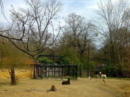 Jackson, MS: Zoo - afrykańskie klimaty