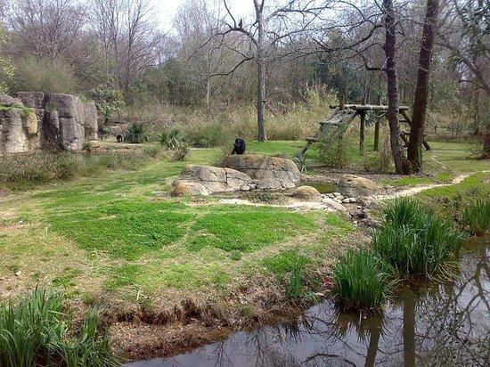 Jackson, MS: Zoo - nasi przodkowie