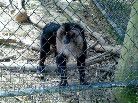 Jackson, MS: Zoo - duma za kratkami
