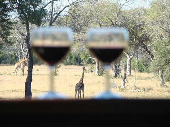Elephant Plains Game Lodge: wine and griaffes