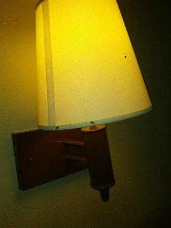 Howard Johnson Express Inn - Amherst Hadley: bugs on lights!!!!