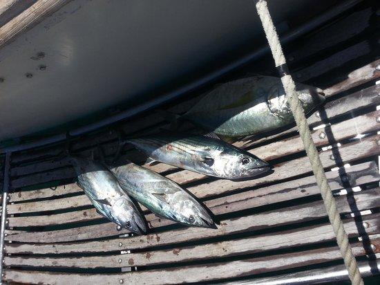 Lanzarote Fishing Club : catch 2013 june