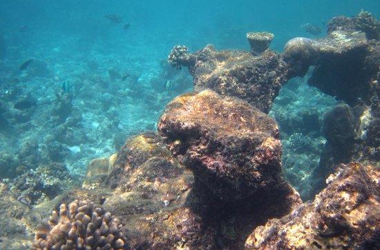Kuramathi Island Resort: Traumhafte Unterwasserwelt