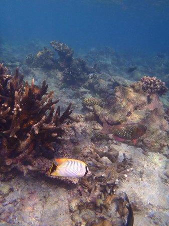 Kuramathi Island Resort: Traumhafte Unterwasserwelt - schöne Korallen