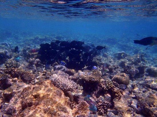 Kuramathi Island Resort: Traumhafte Unterwasserwelt - noch ein anderer Schwarm