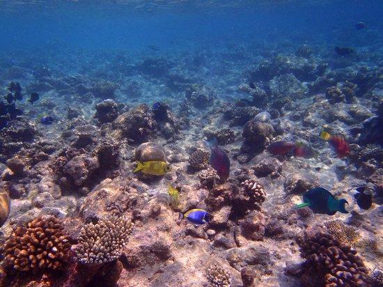 Kuramathi Island Resort: Traumhafte Unterwasserwelt - so viele verschiedene Fische