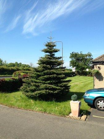 Ashcroft Farmhouse: tree