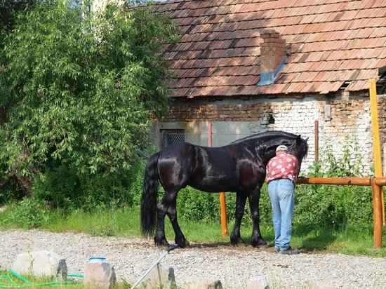 Septimia Hotel: Twister - one of the Friesian horses