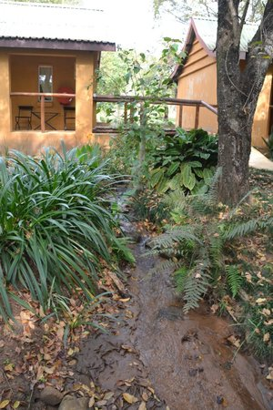 Gecko Lodge: Land surrounding the rooms