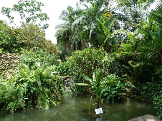 Jardin botanico picture of singapore botanic gardens for Au jardin singapore botanic gardens