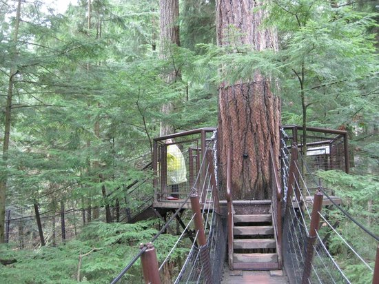 North Vancouver, Canada: Treetop Adventure