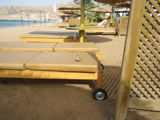 Dahab Resort: little bird