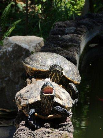Hotel Villa Schuler: Müde Schildkröten im Teich der Villa Schuler
