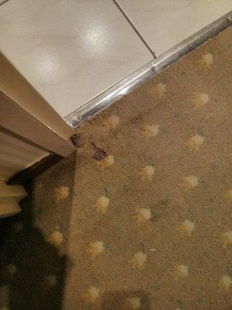 Mercure Paris Tour Eiffel Grenelle Hotel: Hole in the carpet