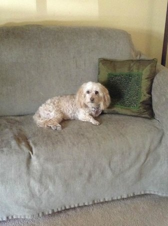 The Gardens At Mile High Ranch : perfect little couch for a small dog