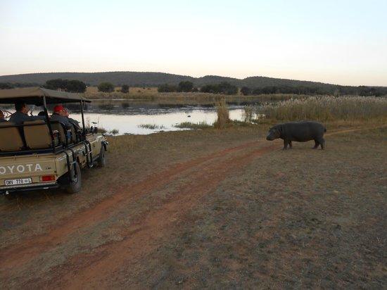 Legend Golf and Safari Resort : Entebeni game drives are terrific