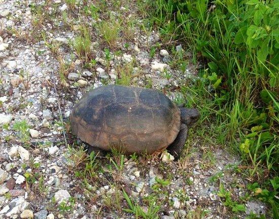 Legacy Trail: Turtle Crossing
