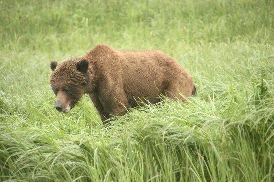 Great Bear Lodge: Roxanne, one of the bears feeding