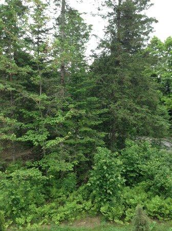 Le Domaine du Lac Saint Charles: Woods around the cabin