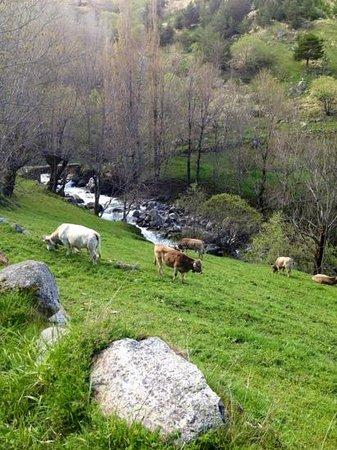 Pla de l'Ermita, España: camino del pla de la ermita a Taull