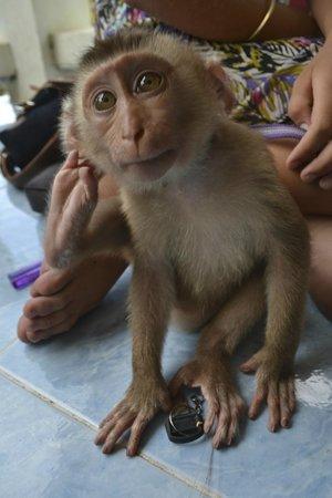 Sunshine Divers Resort: the monkey