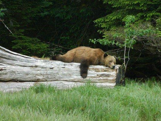 Seascape Waterfront Resort: Sleeping Bear on Quadra