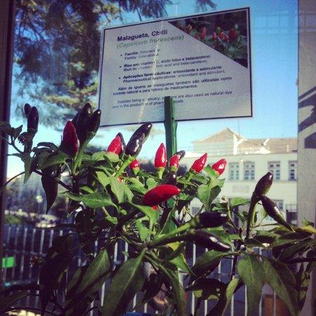 Centro Ciencia Viva do Algarve : Greenhouse