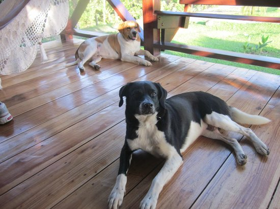 La Anita Rainforest Ranch: The farm dogs on our cabin's porch