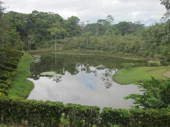 La Anita Rainforest Ranch: Lake outside the main area