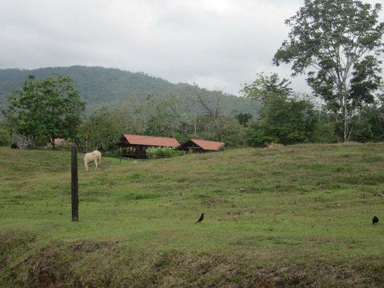 La Anita Rainforest Ranch: Trueno's pasture