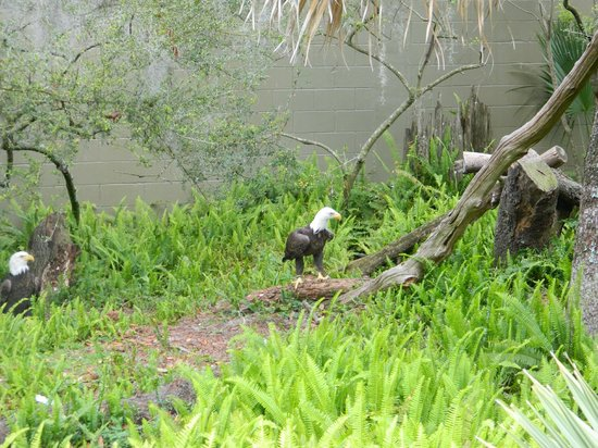 Tampa's Lowry Park Zoo: Bold Eagles