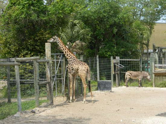 Tampa's Lowry Park Zoo: Feeding time
